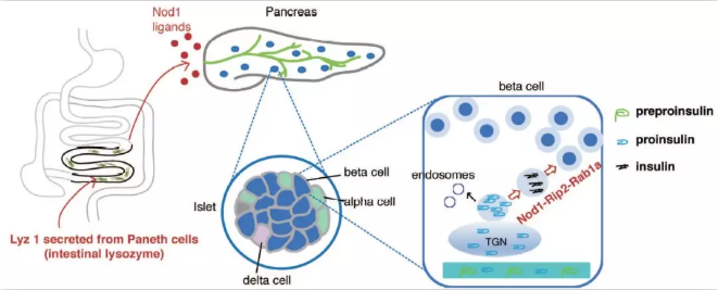 刘志华-Cell  research-1